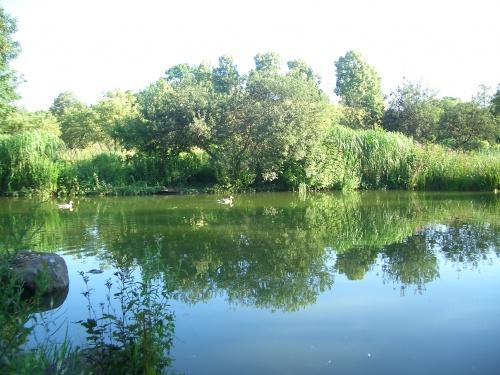 Seit einigen Jahren absolviere ich mein Lauftraining auch im Münchner Westpark, der auch um zwei kleine Seen herum führt