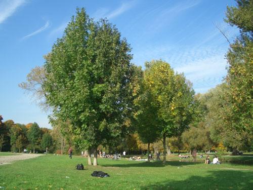 Marathon München im englischen Garten